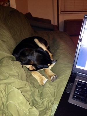 He's so sweet when he's sleeping...and not trying to sit ON my laptop.